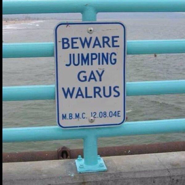 jumpinggaywalrus